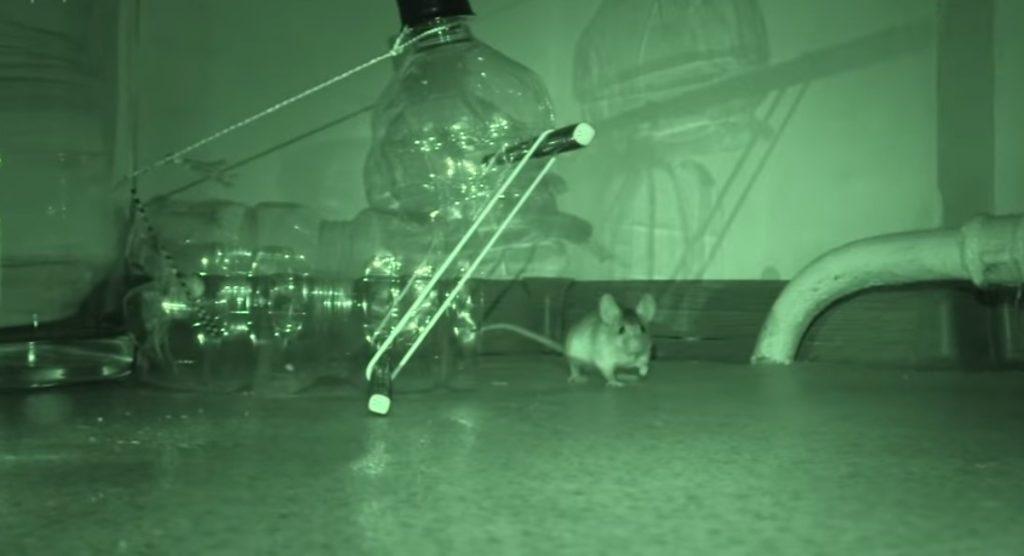 Поимка мышки - проверка лайфхака с мышеловкой- смотри бесплатно